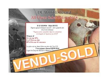 Vente avec paiement en ligne: B 15-1019934 - Male ROUX-Grand Pigeon Musclé