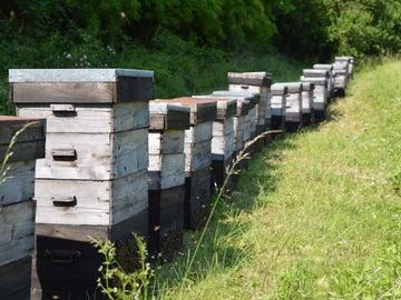 Les miels : Vente de miel toutes fleurs