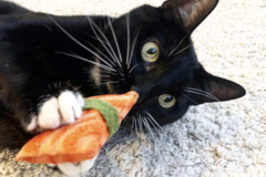 Selling with online payment: Tiny Sashimi catnip toy