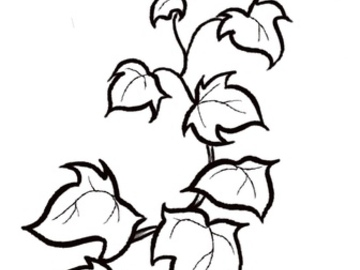 Tattoo design: Simple Ivy