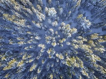 Workshop Angebot (Termine): Achtsamkeit Meditation Immunboost Waldbaden Retreat
