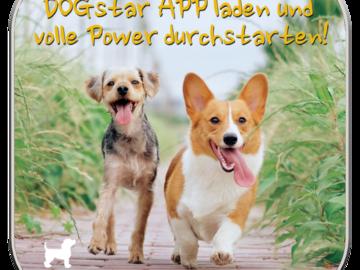 Produkt: DOGstar Induktionsladegerät