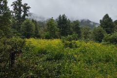 Land Available for Lease: Mountain Meadows