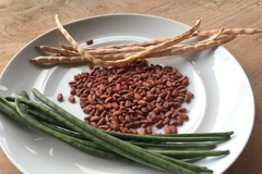 Share or Trade: Seeds - long beans