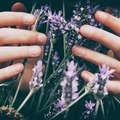 Events priced per-person: Aromatherapy for a Balanced Life