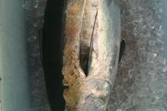 Offering: Full prep sportfishing - Southeast Florida