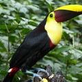 Réserver (avec paiement en ligne): Randonnée indigène entre Panama et Costa Rica