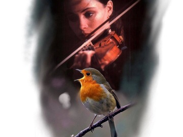 Tattoo design: Violinist and Robin