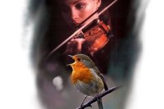 Tattoo design: Violinist and Robin
