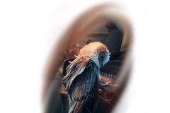 Tattoo design: Owl on Piano