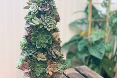 Selling with online payment: Holiday Succulent Tree,  12 Inches
