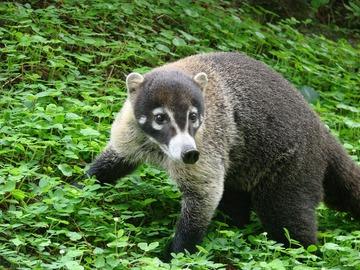 Réserver (avec paiement en ligne): Randonnée dans le sud du Costa Rica