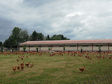Vente avec paiement en direct: les volailles de guillaume (poulets,pintades,chapons de pintades)