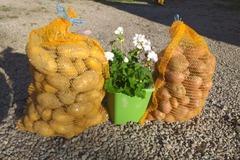 Vente avec paiement en direct: pomme de terre BIO