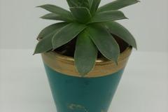 Vente: Sempervivum tectorum