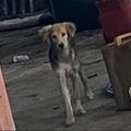 Anuncio: Perro en adopción