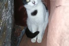 Anuncio: Gatito en adopción