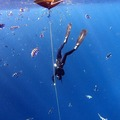 Freediving courses: Private AIDA 3 Course in Dahab, Egypt