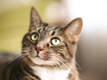 Offre: Garde de chat