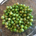 pay online or by mail: Tiny from Coban Tomatillo
