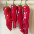 pay online or by mail: Italian Pepperoncini Pepper