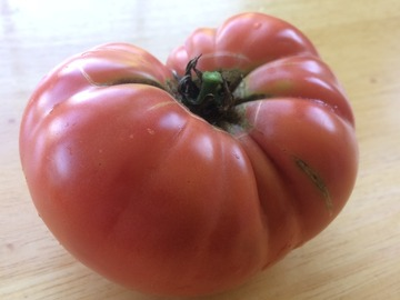 pay online or by mail: Granny Cantrell Tomato