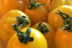 pay online or by mail: Hartman's Yellow Gooseberry Tomato