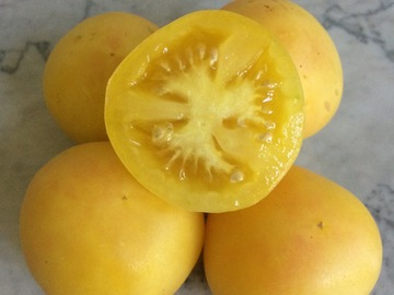pay online or by mail: Yellow Garden Peach Tomato