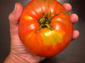 pay online or by mail: Italian Heirloom Tomato