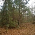 Land Available for Lease: Raw land one hour from Houston