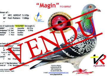 Vente avec paiement en ligne: COUPLE  VENDU 75% Vandemaele W x lignée Magin