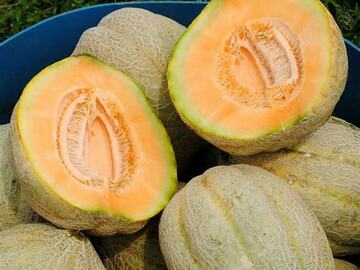 pay by mail only, w/ request form: Pike Muskmelon