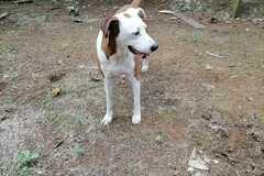 Anuncio: Hermosa perra en adopción