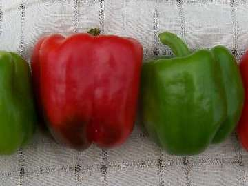 pay online or by mail: Keystone Resistant Giant Pepper