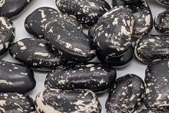 pay online or by mail: Iroquois Skunk Beans