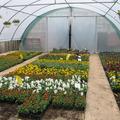 Vente avec paiement en direct: Fleur, Fruitier et plant de légumes
