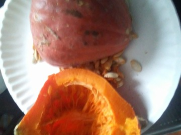pay by mail only, w/ request form: Golden Nugget Squash Seeds