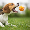 Employee Engagement & Team Building: Brain Games to play with your dog while working from home