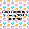 Anuncio: Se buscan perritos para hacer grooming, GRATIS