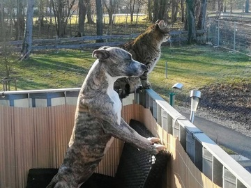 Urlaubsbetreuung: Hundebetreuung Raum Bad Radkersburg und Umgebung