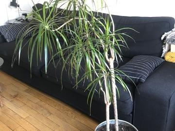 Giving away: Donne 2 plantes d'intérieur avec leur pot