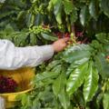 Opportunities: Farm Laborer 'Aina Crew $13-$14 per hour