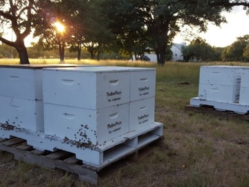Offering Services: Pollination hives available in Texas and Florida
