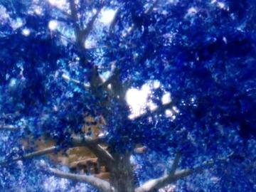Selling: Enchanted Tree Reading