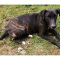 Anuncio: Bob, perrito de 7 meses busca familia que lo adopte