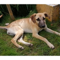 Anuncio: Tasha, perrita de 7 meses busca familia que la adopte