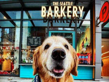 Employee Engagement & Team Building: DIY Biscuit Basics with The Seattle Barkery (<20 Attendees)