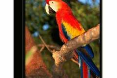 Liquidation/Wholesale Lot: Wholesale Trends International Macaw Parrot 3-D Printed Frame