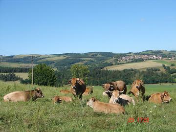 Vente avec paiement en direct: Viande Aubrac Bio Du Cantal