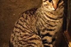 Anuncio: Gato Perdido